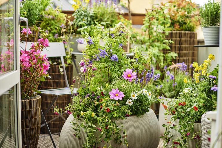 Klimatsmart trädgård